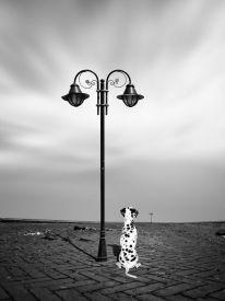 A faithful dog II